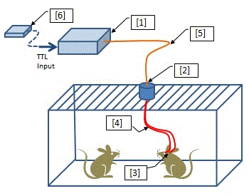 Optogenetics-Toolbox-for-Free-Moving-Animals