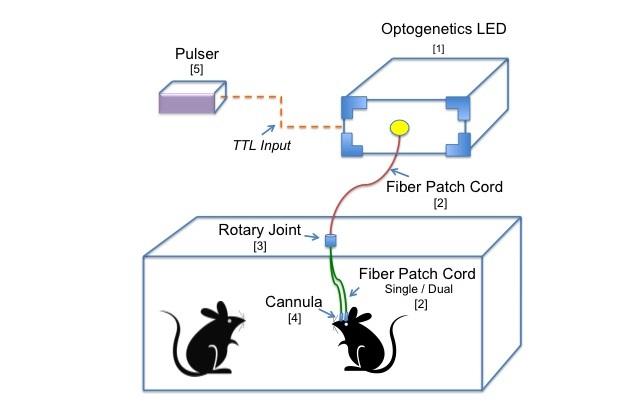 In-vivo diagram